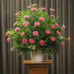 FUNERAL CARNATION 30 PINK