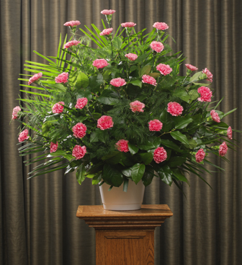 FUNERAL CARNATIONS 36 PINK