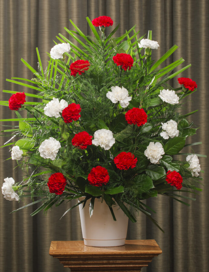 FUNERAL CARNATION 24 RED WHITE