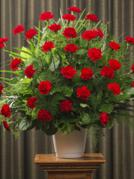 FUNERAL CARNATION 36 RED