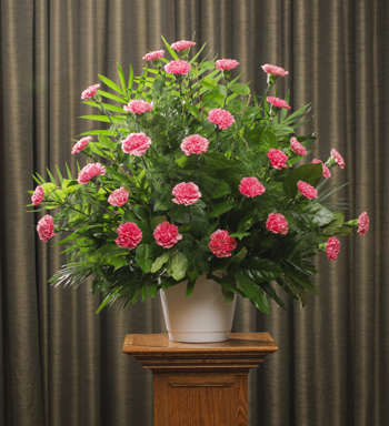 FUNERAL CARNATIONS 30 PINK
