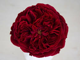 Rose Garden Tess