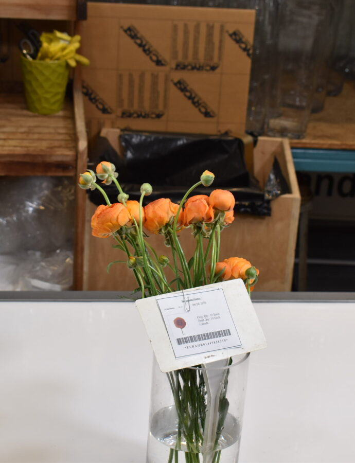 Ranunculus Orange
