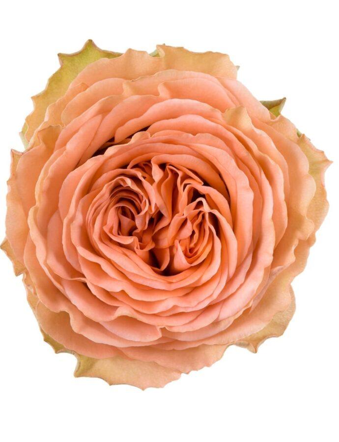 Rose Garden Country Home