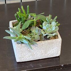 Mixed Succulents 4