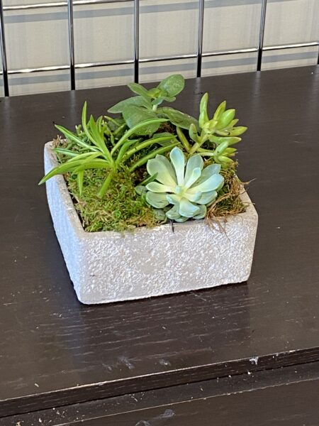 Mixed Succulent 5