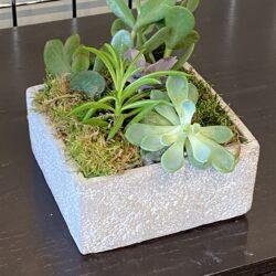 Mixed Succulent 6