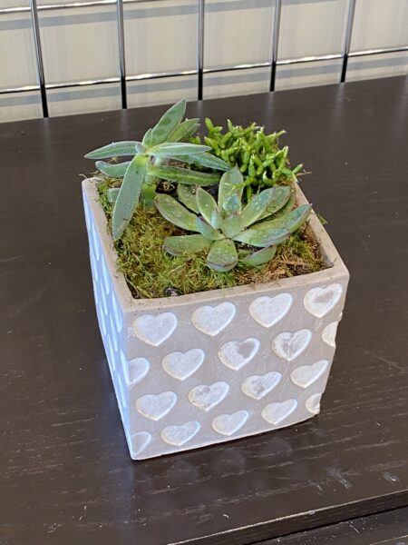 Mixed Succulent 7