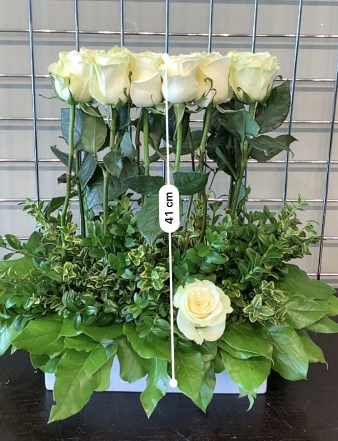 White Low Profile Rose Hedge