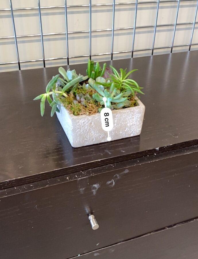 Mixed Succulents 3
