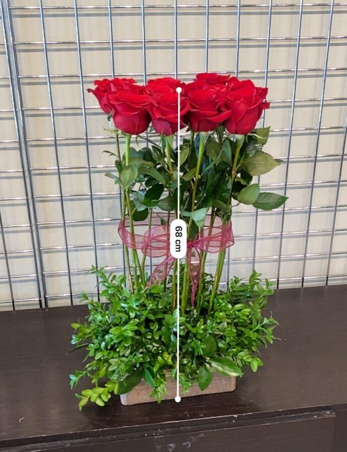 Rose Hedge Low Profile