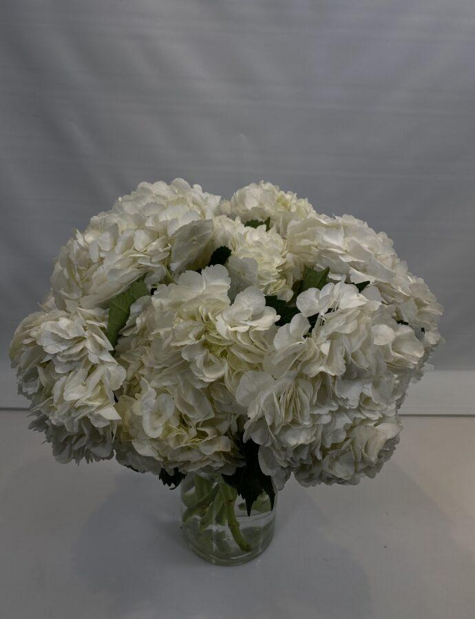 HYDRANGEA S. A. WHITE