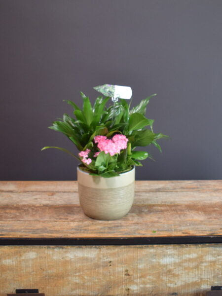 Peaceful Mixed Planter