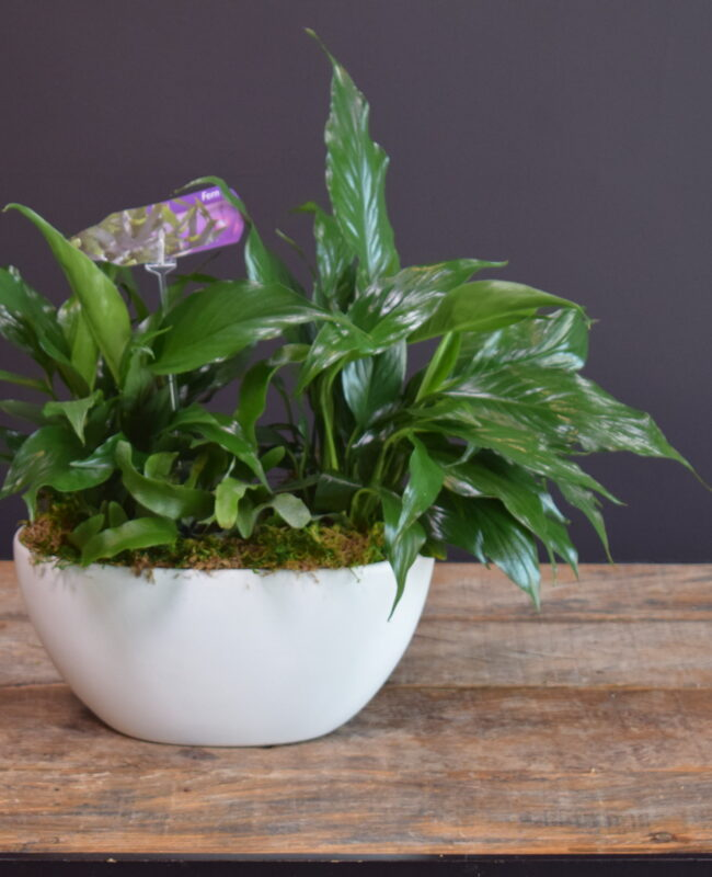 Tranquil Mixed Planter