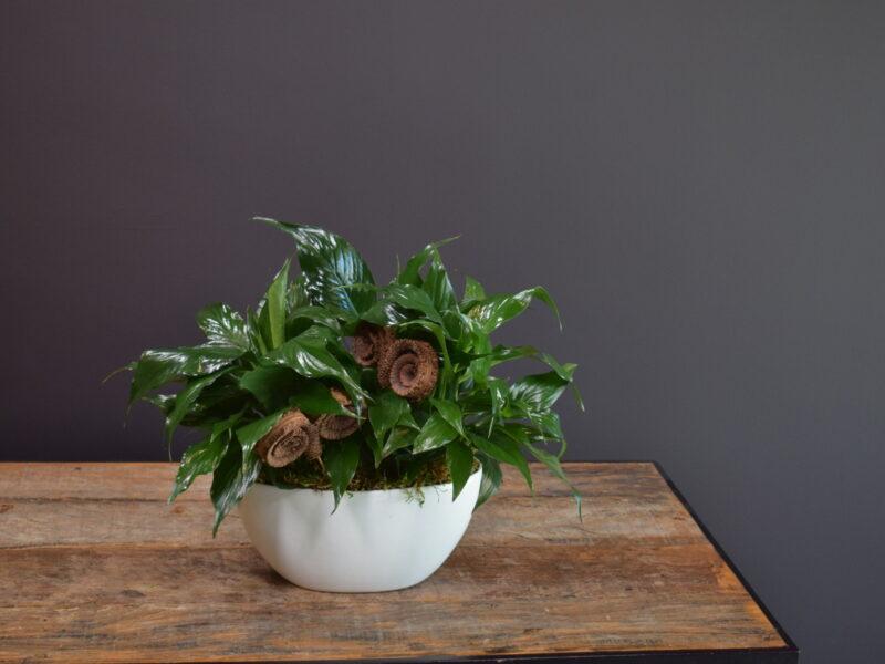 Metta Planter