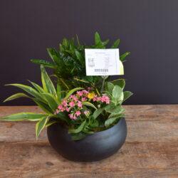 Smooth & Subtle Planter
