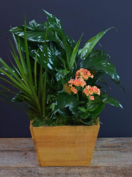 Tropical Treasure Planter